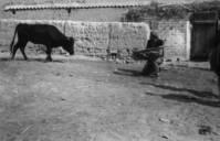 Toreo de vaquilla en un corral privado